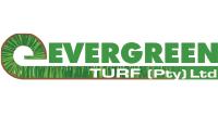 evergreen turf