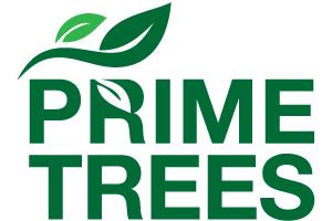 Prime Trees